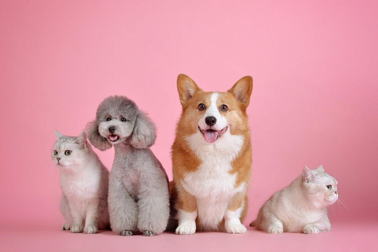 小寵兒寵物用品公司